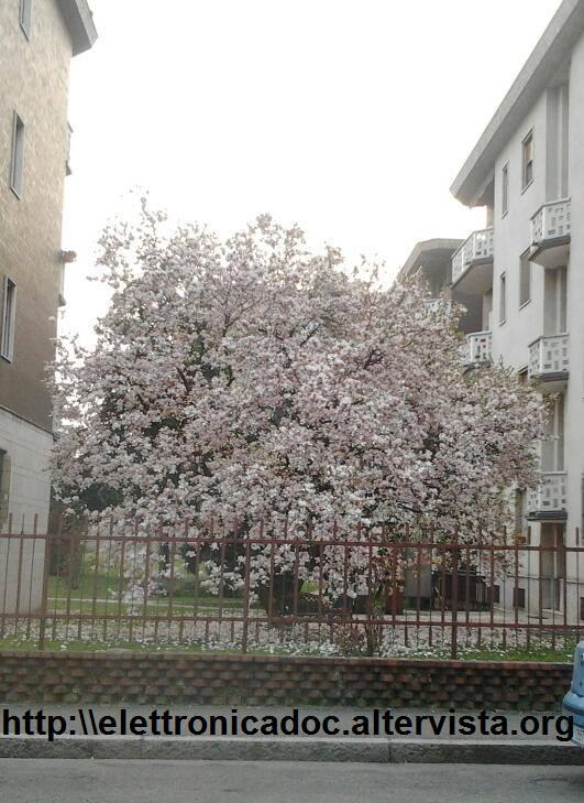 Primavera a Gorgonzola